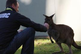 """Bert Cocu: """"Onderschat mentaliteit van Australiërs niet"""""""
