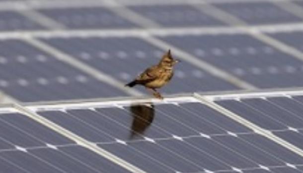 Vogeltjes en zonnepanelen zitten roeiers in de weg